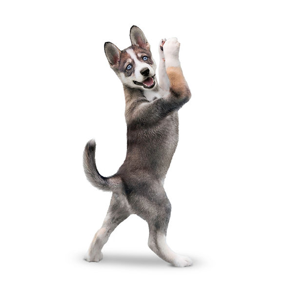 yoga dog puppy warrior pose