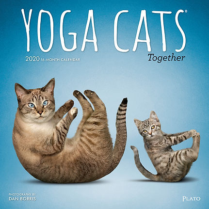 1318-7__YogaCatsTogether__PL_12SQ20_v04