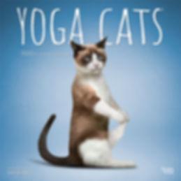 1225-8__YogaCats__BT_12SQ20_v02 1 web.jp