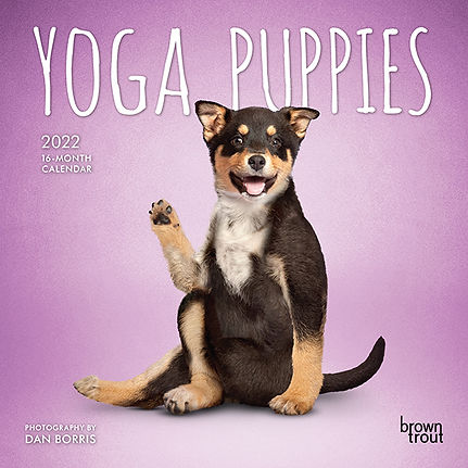 4029-9__YogaPuppies__BT_7MIN22_v01-1.jpg