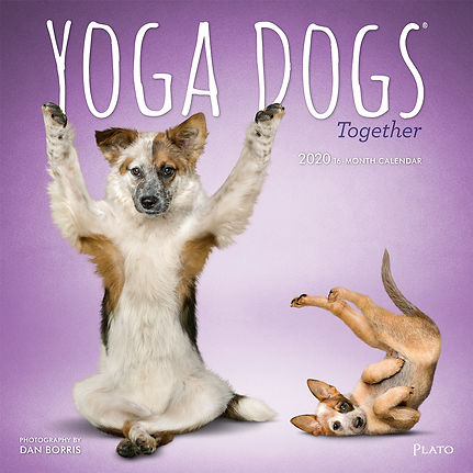 1320-0__YogaDogsTogether__PL_12SQ20_v03