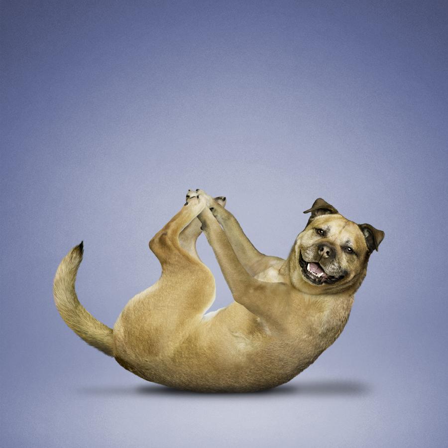 Фото красивых животных мира на рабочий версии
