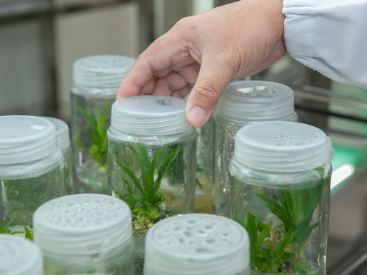 What is Biotechnology? Its Importance and Applications in Today's World