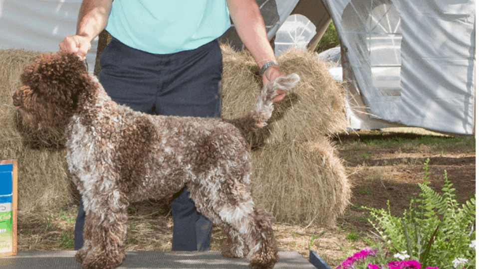 """AKC Major Ptd Two By Two In Good Graces """"aka Gracie"""""""