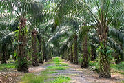 palmoil_featured.jpg