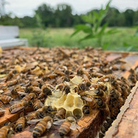 Supporting our Earth, one honeybee at a