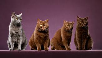 Katzen-Quartett