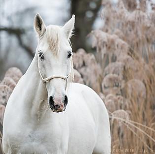 Pferde Outdoor