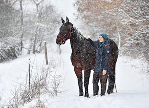 Pferde im Schnee, ein Traum in weiß