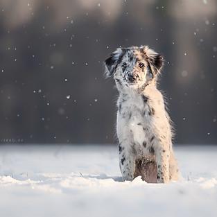 Hunde Outdoor