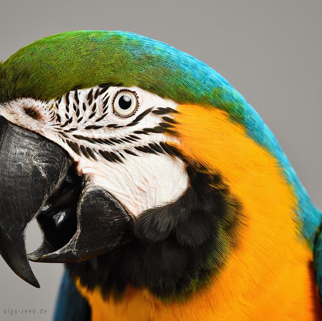 Tierfotografie Stuttgart - Olga Zeeb