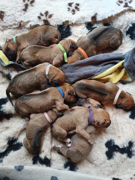Lewa's pups.jpg