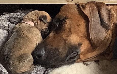 Moeder en dochter.jpg
