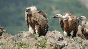 vultures#13.jpg