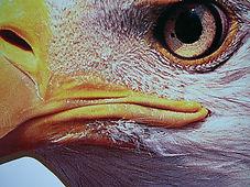 eagle 3 eye.jpg