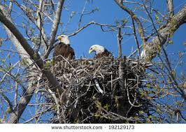 nest#20.jpg