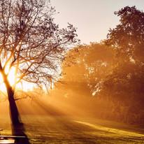 Early Sunrise at The Coppleridge
