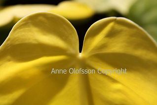 Végétal jaune, feuille, photo