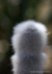 Photo Cactus des Andes