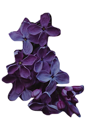 purple flowers cutout.png