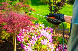 Pest Control in the Garden. Gardener Spr