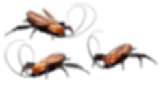cockroach-3346121_640.png