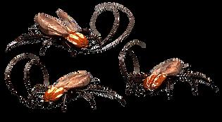 kakkerlakken-plaag.png