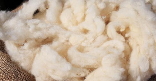 Raw-wool-homepage-1000-x-1000.jpg