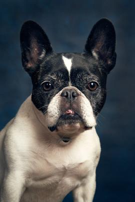 Fotografia ritratto cane gatto animali.j