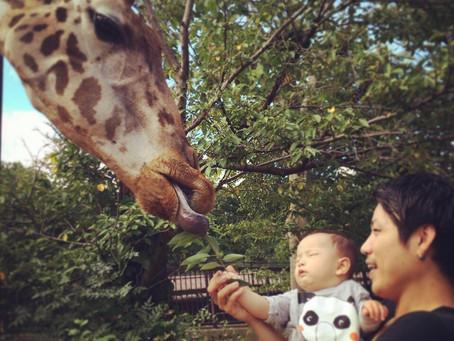 王子動物園と須磨水族館♫