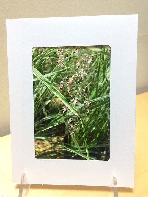 Watery Grasses Photo Card