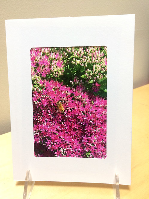 Bee Flower Photo Card