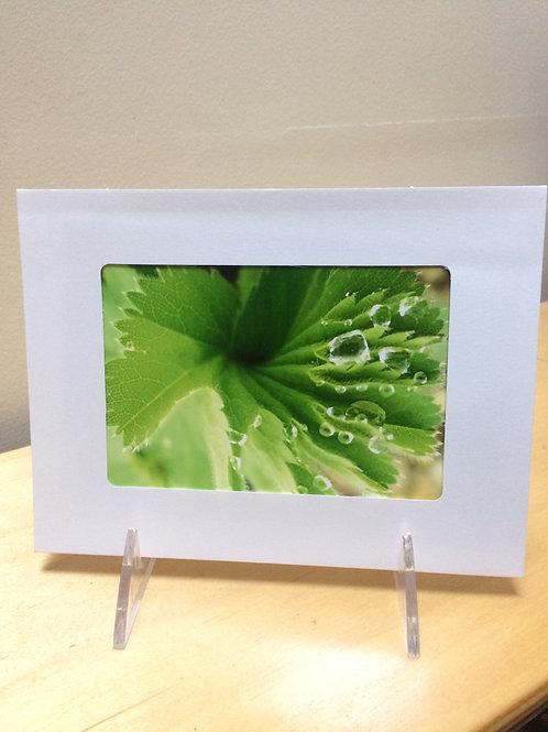 Waterdop Leaf Photo Card