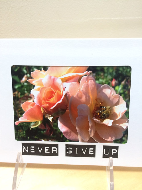 Persistent Pink Rose Photo Card