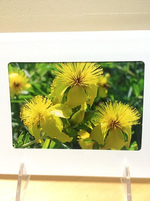 St. John Flower Photo Card