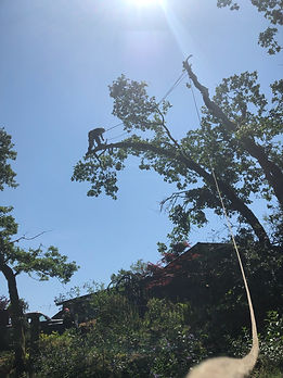 JT & Sons Tree Service