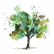 albero-verde.jpg