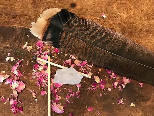 Turkey Tail Feather