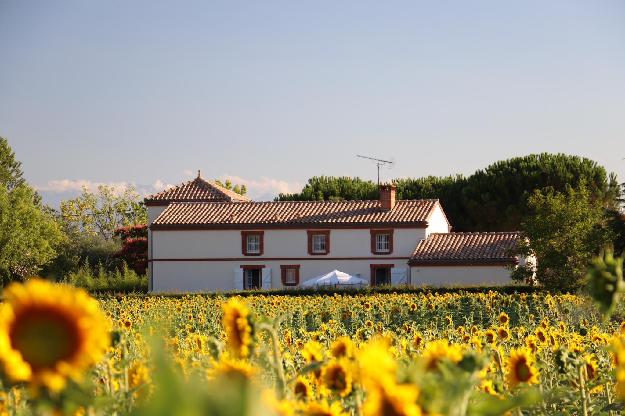 La maison et le champ de tournesols