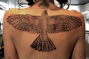 Hawk for Amber