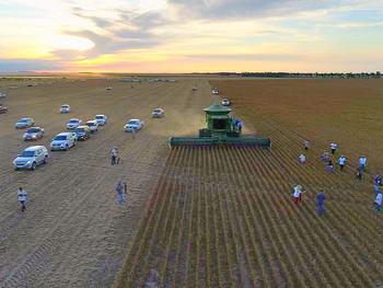 Plantio de soja é visto como o caminho para o desenvolvimento econômico de Roraima