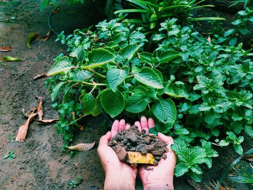 50% do lixo que produzimos é orgânico. E se isso virasse vida?