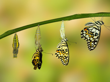 Pon todo tu potencial y transforma tu realidad