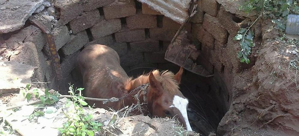 caballo en pozo