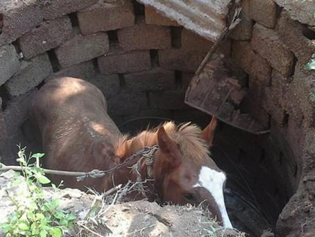 El caballo en el pozo