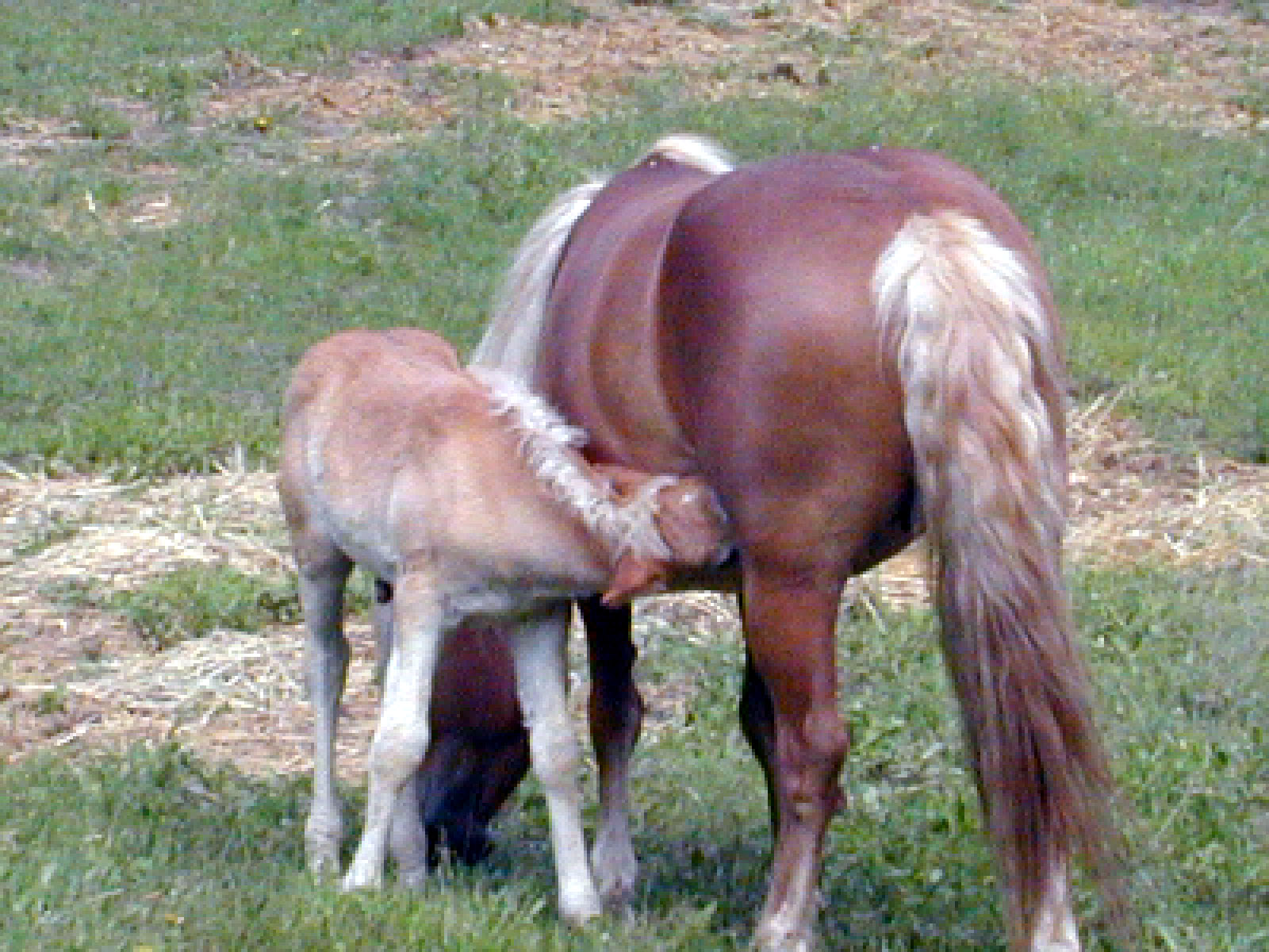 Pony Al and Mom_edited.JPG