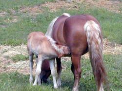 Pony Al and Mom_edited.JPG