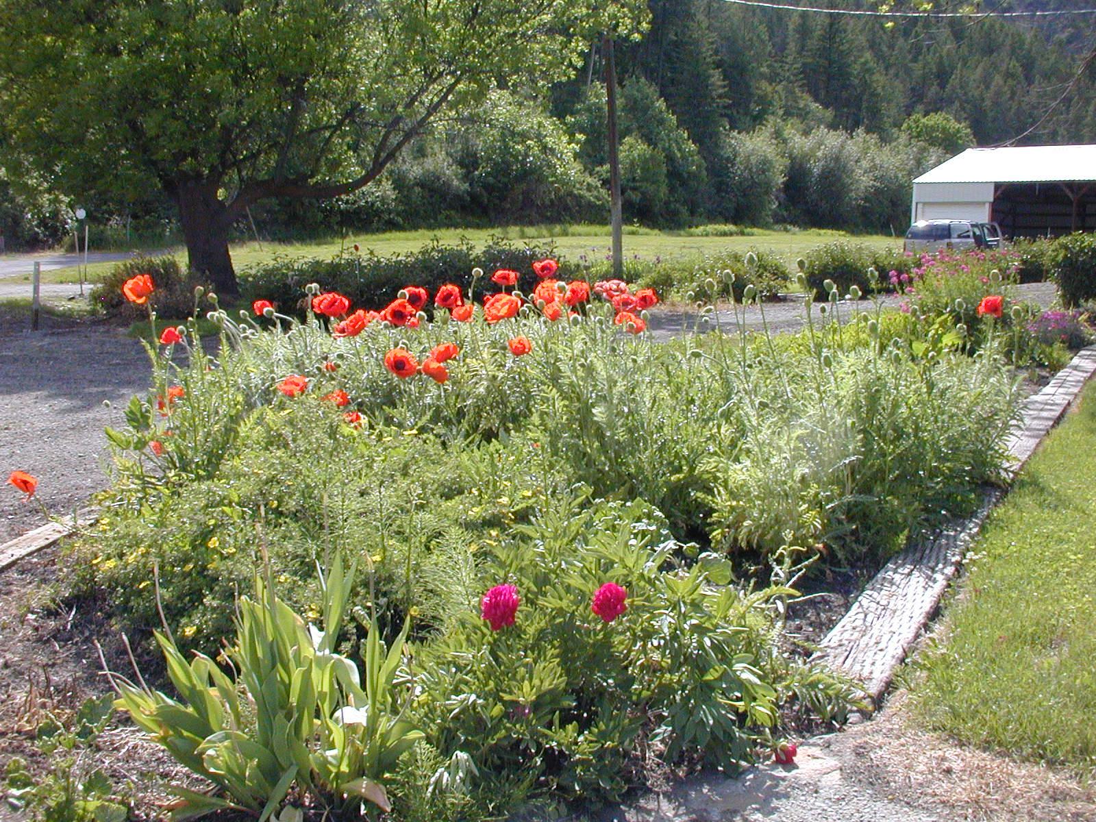flower garden in front.JPG