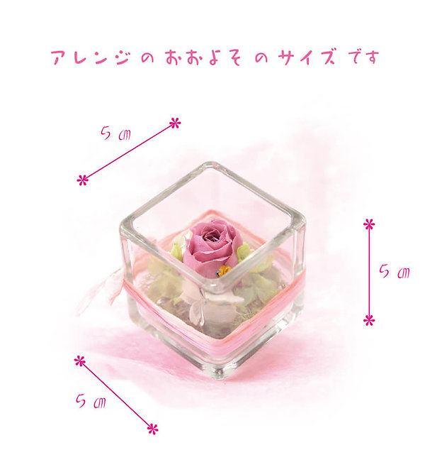 Cube ベリーピンク サイズ