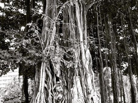 バニヤンという木